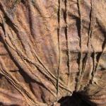 Eric Pedersen: Camel Detail