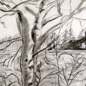 Eric Pedersen - Birches on Big Bear Lake Drawing